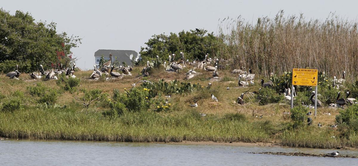 Rookery islands in Galveston Bay