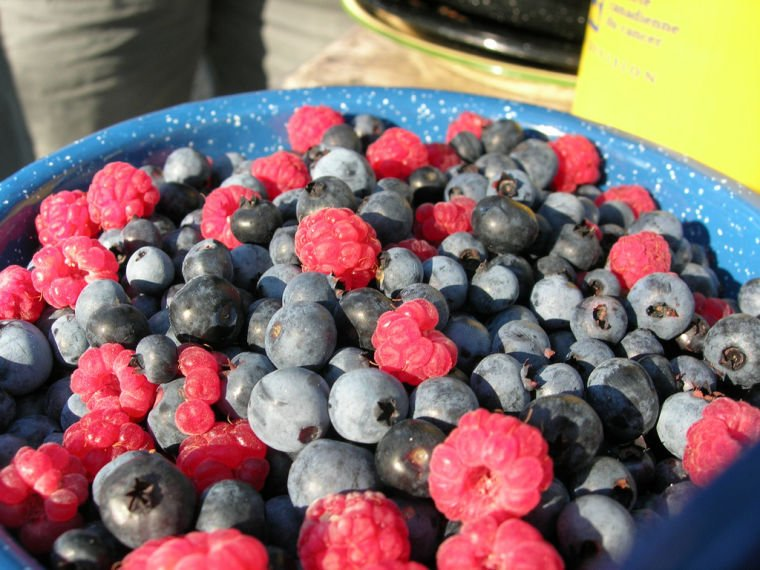 Benefits of berry family enormous