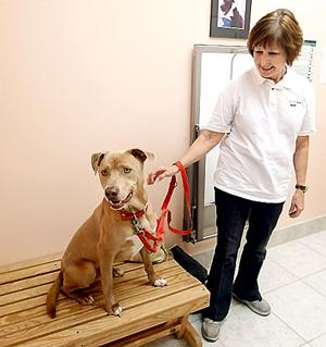 Boy and a pit bull get a second chance