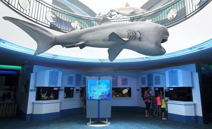 Moody Gardens Aquarium Closing For Phase 1 Renovations