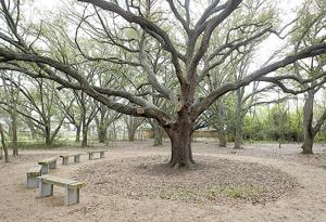 Ghirardi Oak