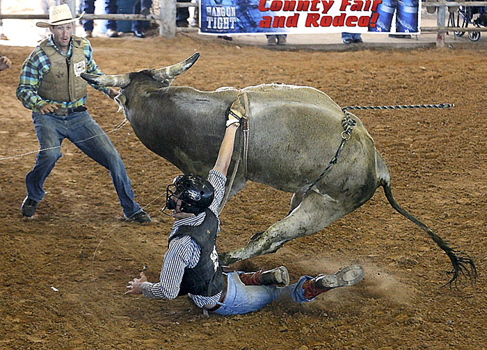 Drug by a bull
