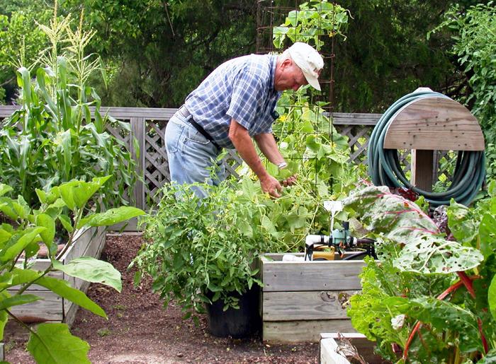 Pick vegetables at proper time