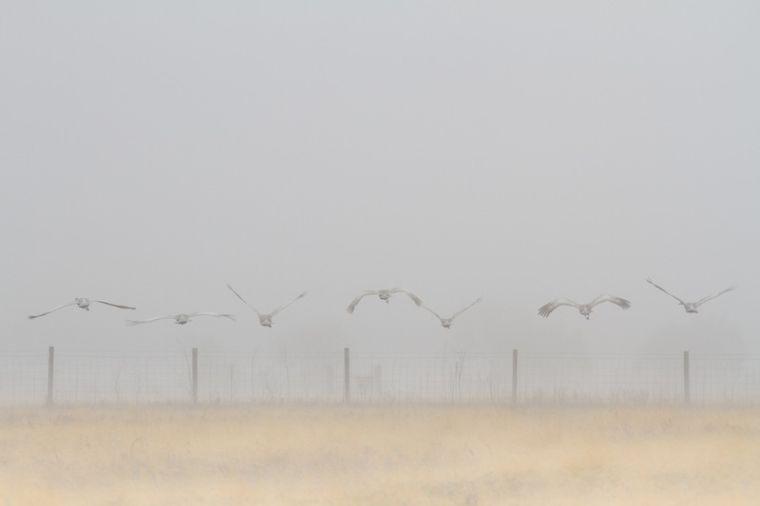 One foggy day