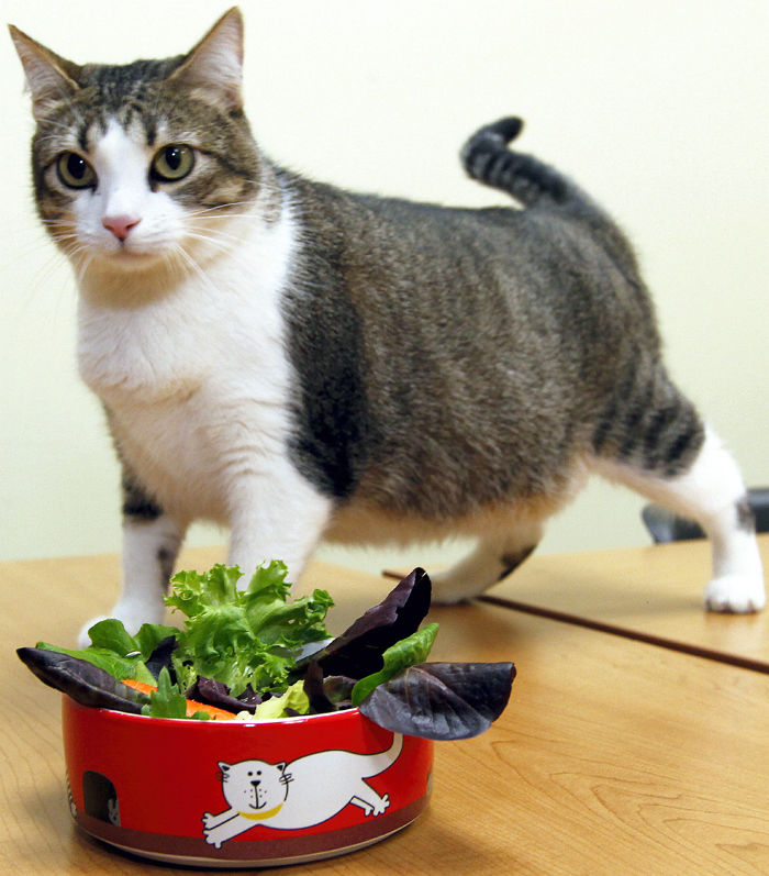 Pets pack on extra pounds just like humans do