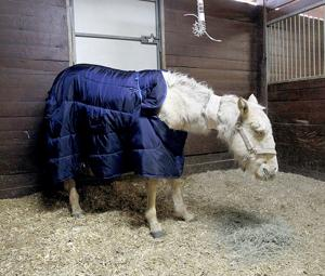 Horse recovering