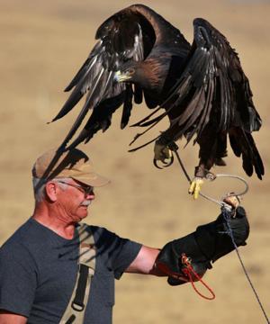 Casper man hunts with a golden eagle