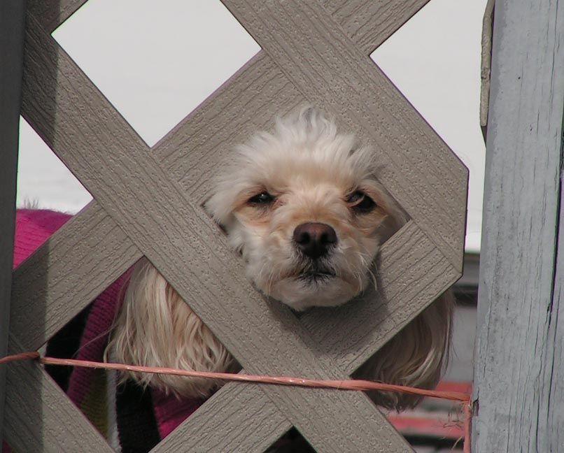 Readers Cute Pet Photos Dogs Greensboro News Amp Record