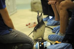penguin_gso_encounter007.JPG