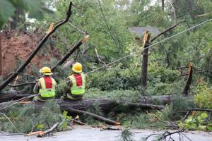 PHOTOS: Storm damage to Monroe's Garden District