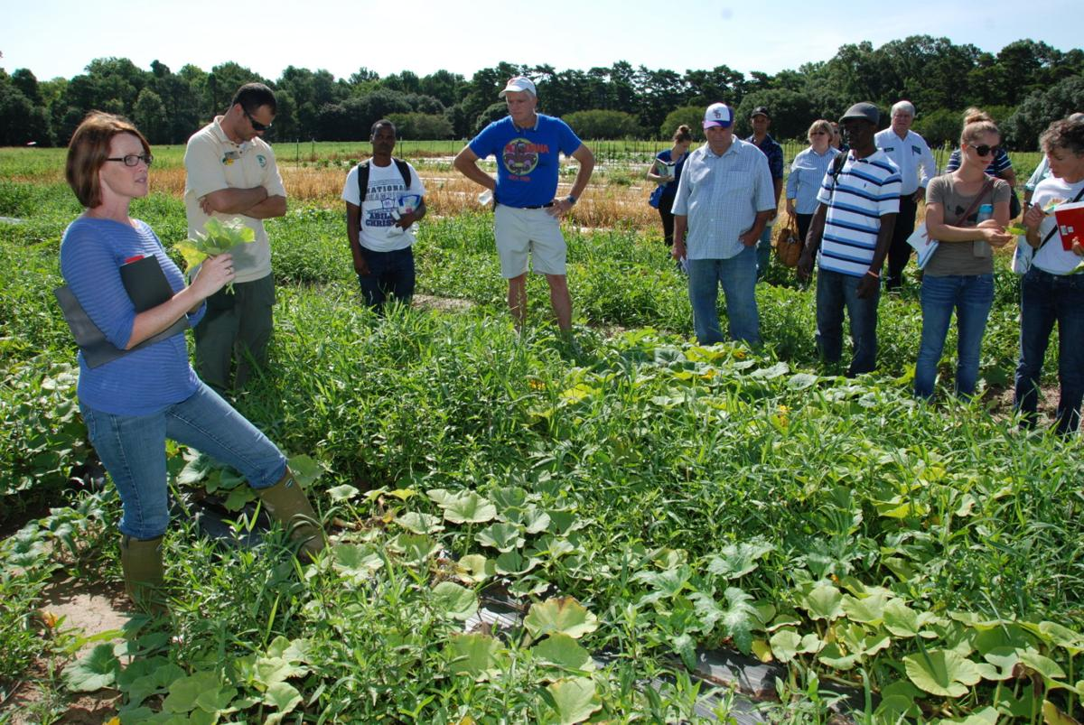 Rain Disease Topics Of Field Day Local State Headlines