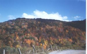 Pioneers in Paradise: Big Foot of Monster Mountain