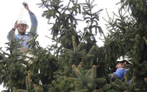 BHC 110813 Christmas Tree 3.jpg