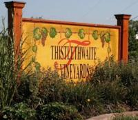 Thistlethwaite Vineyards