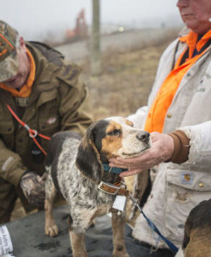 Uniontown Beagle Club enjoys hounds and the great outdoors