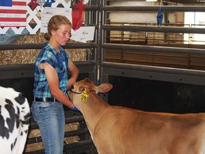 Showing at the fair