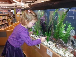 Monona Library Fish Tank