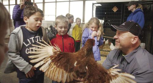 Ripp's Dairy Farm features wingspan