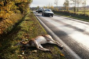 Walker wants to repeal DNR dead deer pick up program