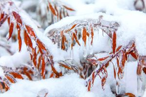 Early winter conditions hurting Wisconsin farmers
