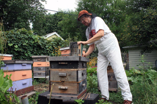 Beekeeper to share the buzz about bees Aug. 27