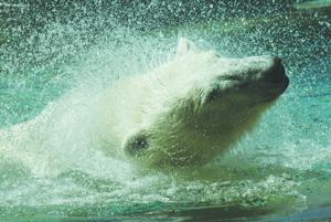 Sakari splashing