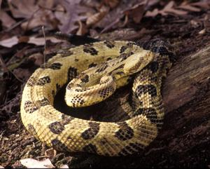 DNR dismisses rattler bite claim