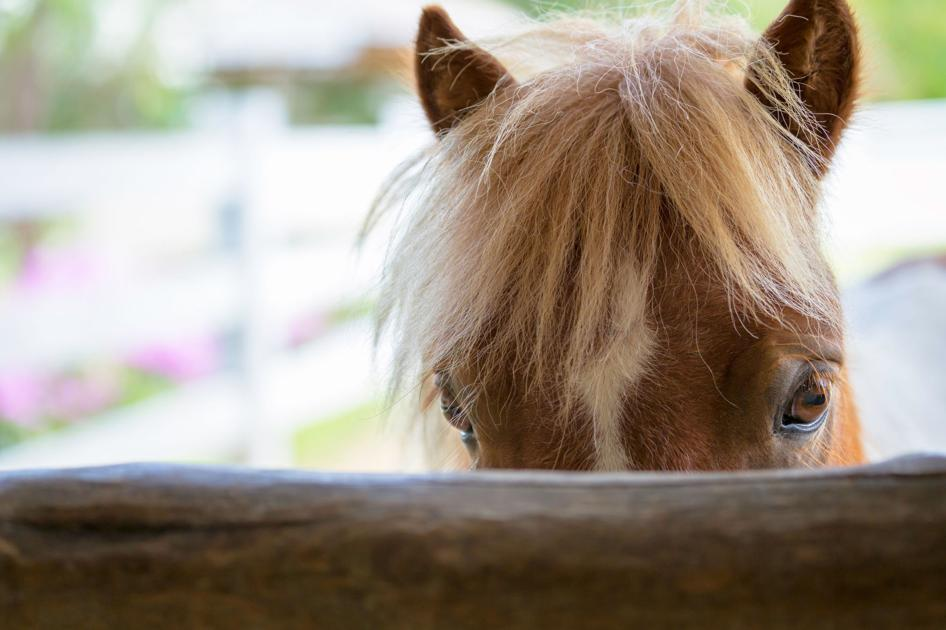 State warns horse owners to vaccinate against West Nile virus - iFIBER One News: IFIBER ONE News