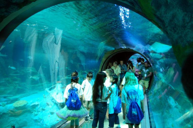 Concord Mills Plans New Attraction 10m Aquarium News