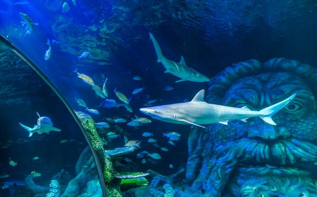 Sea Life Celebrates Arrival Of Sharks Rays News