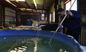 Holtville FFA testing viability of catfish farm