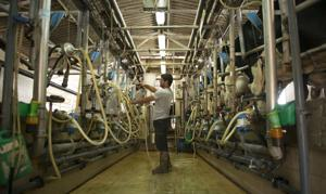 The story of Israel's efficient, high-tech dairy industry