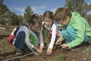 Tu B'Shevat tree planting strengthens connection to Israel's forest