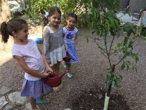 <p>First-graders at Congregation Beth Israel's Haberkorn Religious School plant a new etrog tree in their Evanne Copland Kofman Biblical Garden in advance of Tu B'Shevat.</p>