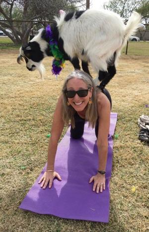 <p>Rabbi Bonnie Koppel participates in a session of goat yoga on Feb. 11 on a goat farm in Gilbert, a Tu B'Shevat activity of Temple Chai.</p>
