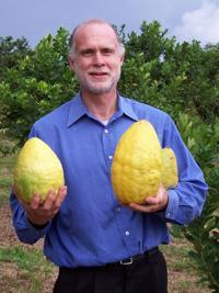 <p>Darrell Zaslow poses with massive etrog fruits that he grew.</p><p>Photo courtesy of Darrell Zaslow</p>