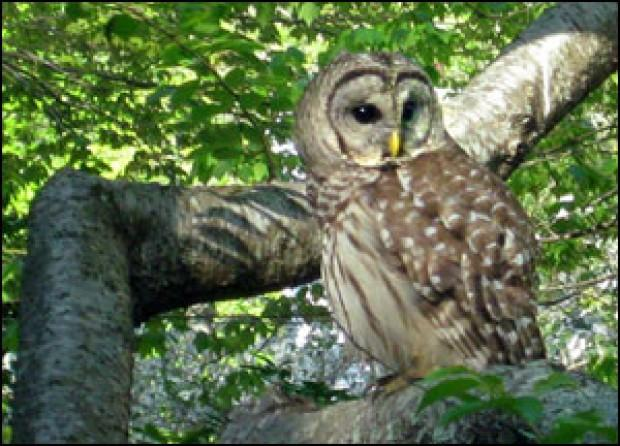 bird s eye view bird stories owl spotting indigo