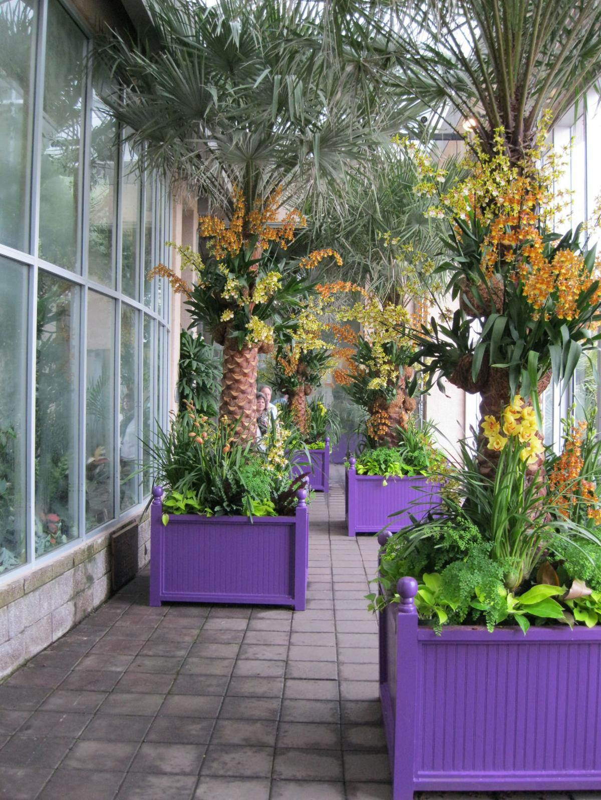 Atlanta Botanical Garden Putting On Yearly Orchid Display Garden