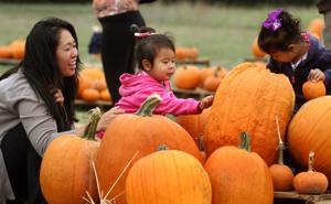 Pumpkin Patch in Harker Heights