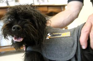 Thundershirts for Cove dogs