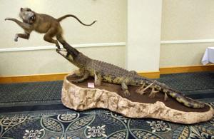 Texas Taxidermy Convention at KCC