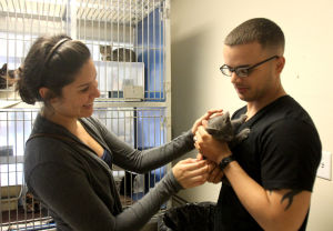 Killeen Animal Control: Loryn Serrano and her husband, James Serrano, both of Killeen, hold an adoptable kitten at the Killeen Animal Control facility Wednesday, Oct. 30, 2013, in Killeen. - Catrina Rawson | Herald