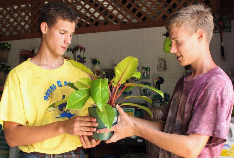 Oma's Garten Pflanzen