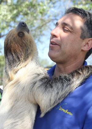 Wild - Sloth