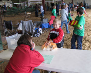 Rabbit Extravaganza in Gatesville
