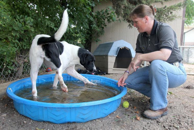 Pets Keeping Cool