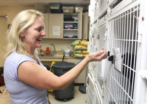 Killeen Animal Control: Renate Witmer, a volunteer at the Killeen Animal Control facility, greets a cat Wednesday, Oct. 30, 2013, at the facility. - Catrina Rawson | Herald