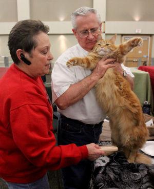 Heart of Texas Cat Club Show