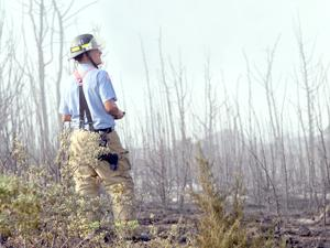 Fire chars 50 acres