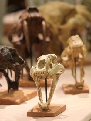 Dinosaur George Exhibit